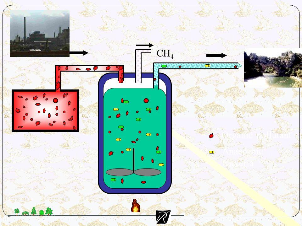 CH4 Organic pollutant Anaerobic bacteria