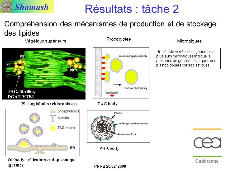 Résultats : tâche 2 Compréhension des mécanismes de production et de stockage des lipides. Procaryotes.