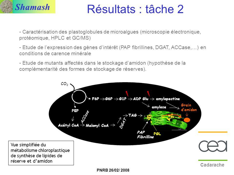 Résultats : tâche 2 Caractérisation des plastoglobules de microalgues (microscopie électronique, protéomique, HPLC et GC/MS)