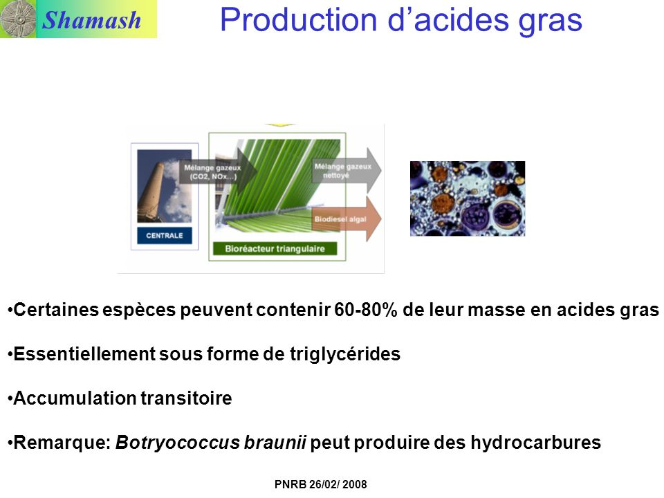Production d'acides gras
