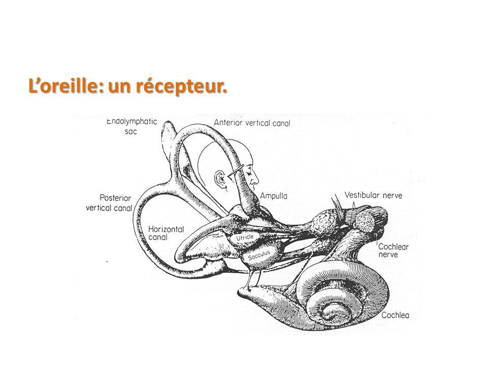 L'oreille: un récepteur.
