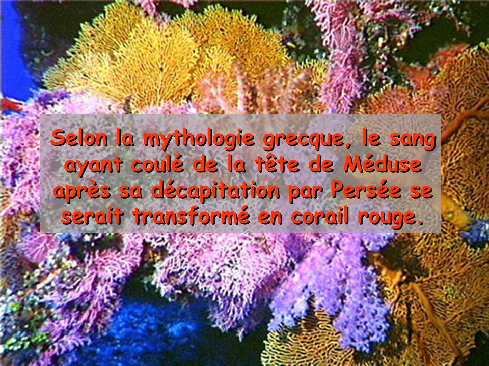 Selon la mythologie grecque, le sang ayant coulé de la tête de Méduse après sa décapitation par Persée se serait transformé en corail rouge.