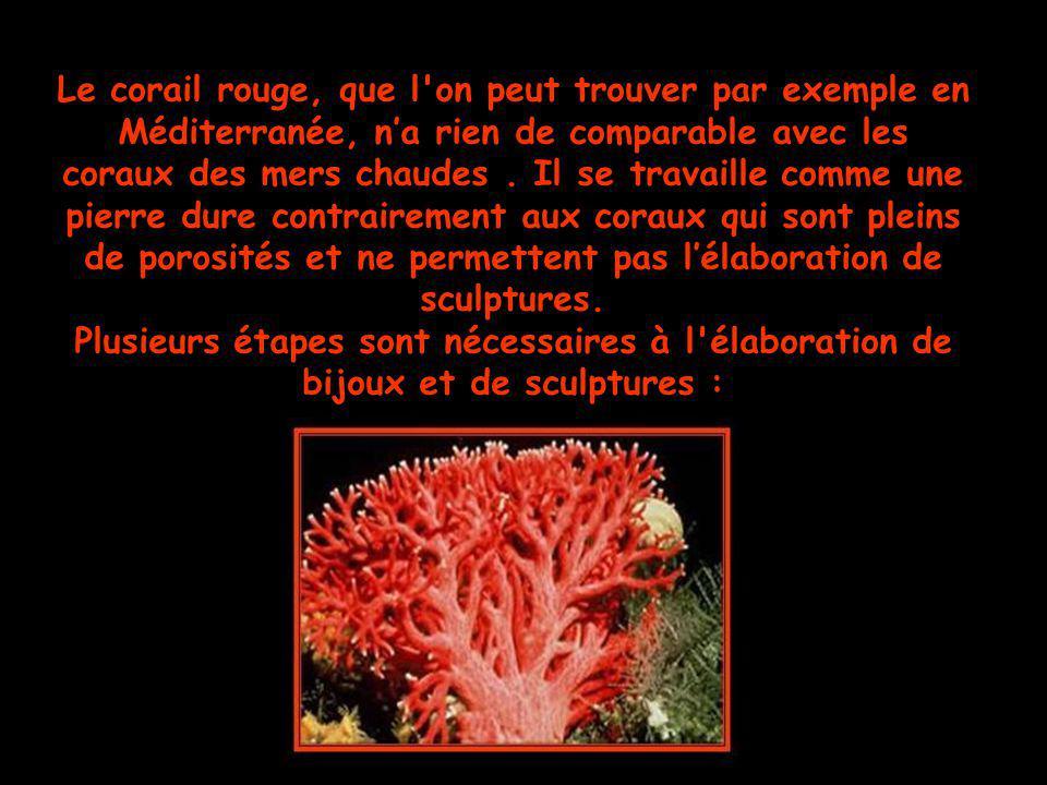 Le corail rouge, que l on peut trouver par exemple en Méditerranée, n'a rien de comparable avec les coraux des mers chaudes . Il se travaille comme une pierre dure contrairement aux coraux qui sont pleins de porosités et ne permettent pas l'élaboration de sculptures.