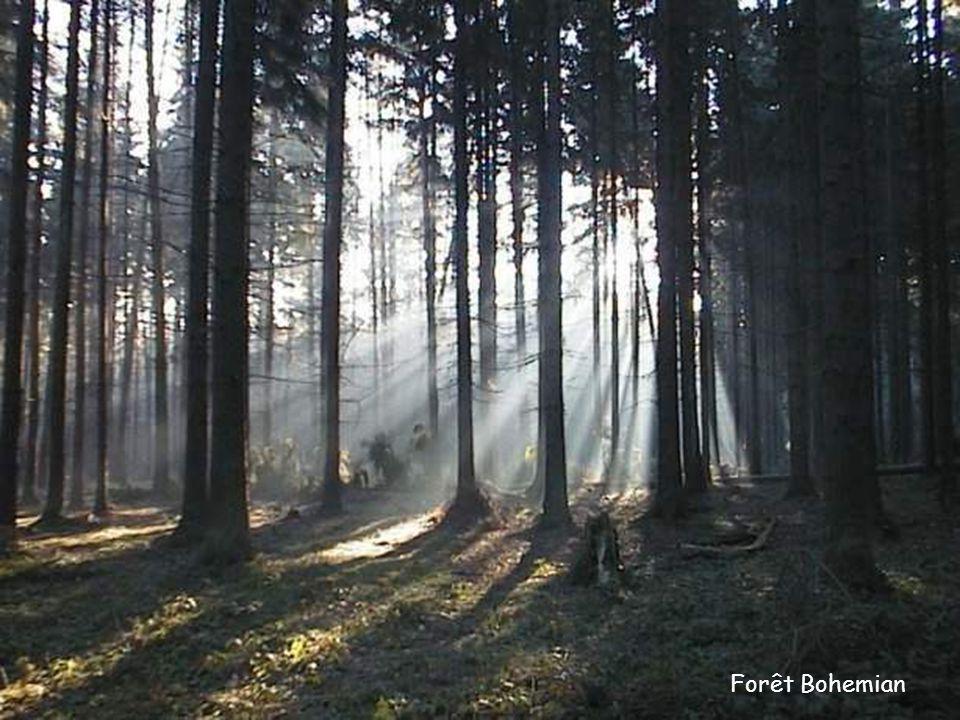 Forêt Bohemian