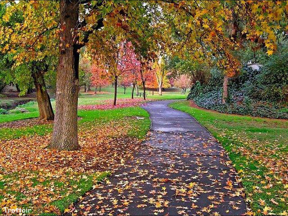 Trottoir d'automne
