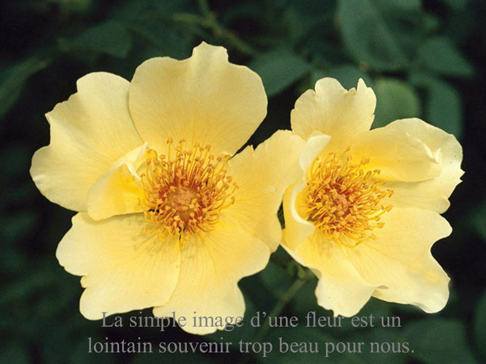 La simple image d'une fleur est un lointain souvenir trop beau pour nous.