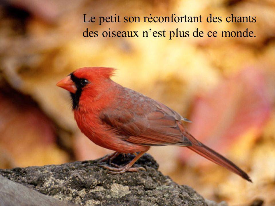 Le petit son réconfortant des chants des oiseaux n'est plus de ce monde.