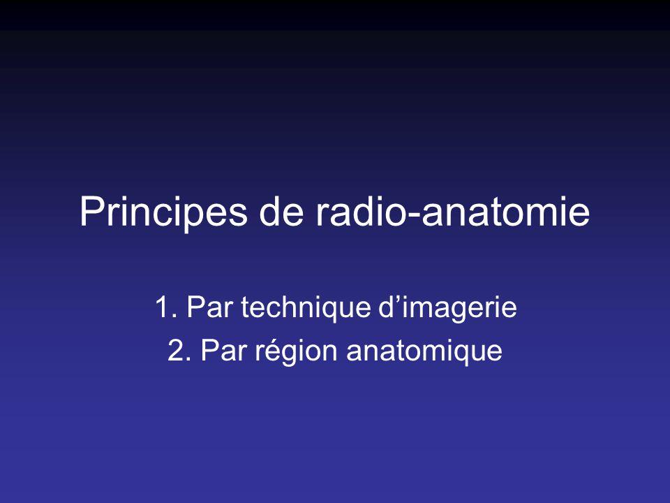 Principes de radio-anatomie