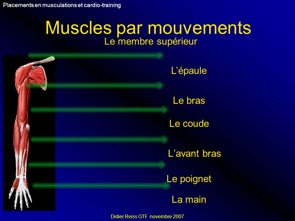 Muscles par mouvements