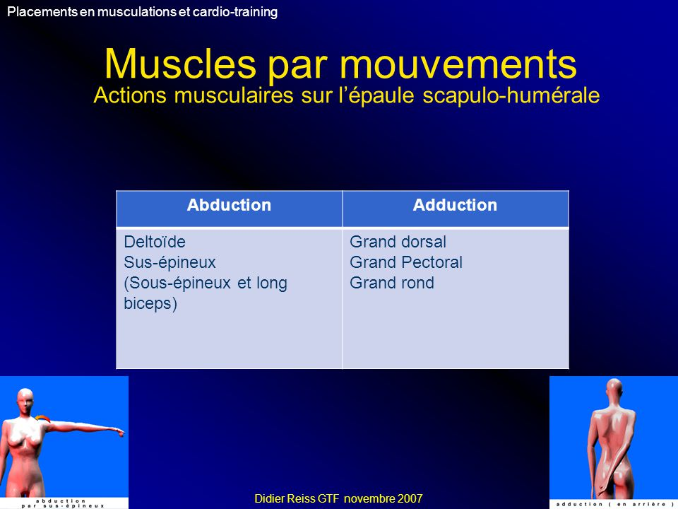 Muscles par mouvements