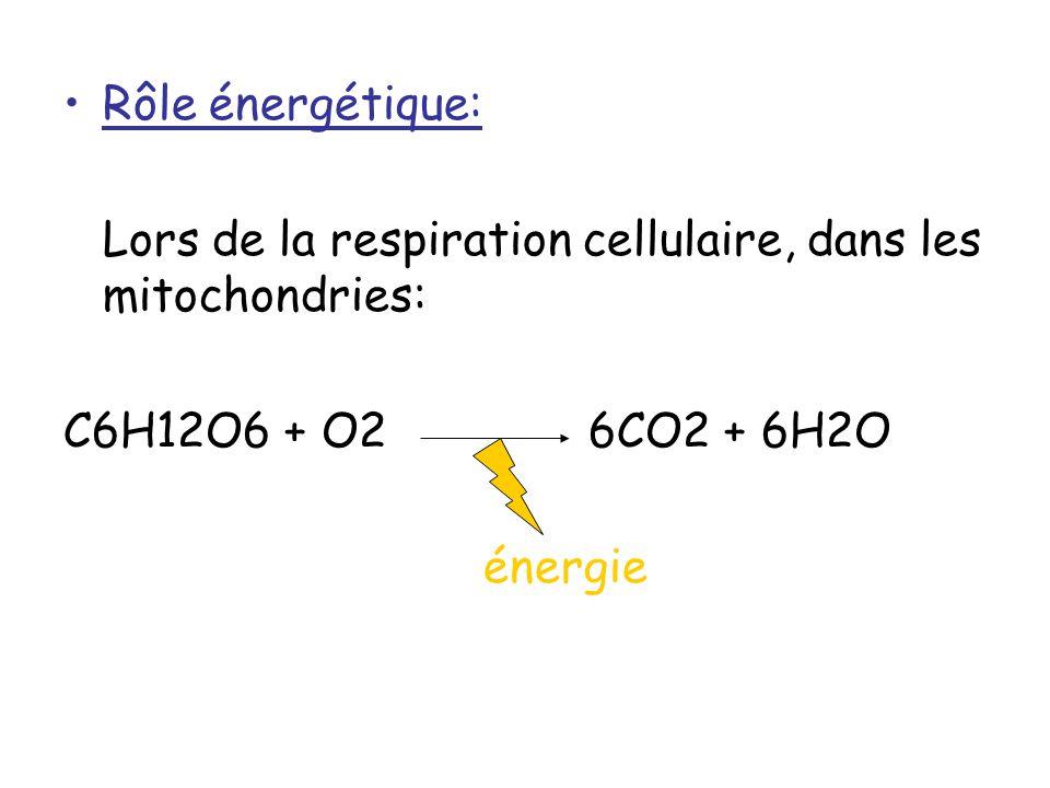 Rôle énergétique: Lors de la respiration cellulaire, dans les mitochondries: C6H12O6 + O2 6CO2 + 6H2O.
