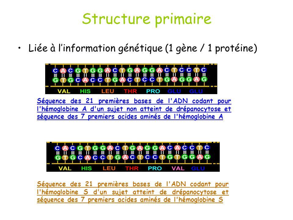 Structure primaire Liée à l'information génétique (1 gène / 1 protéine)