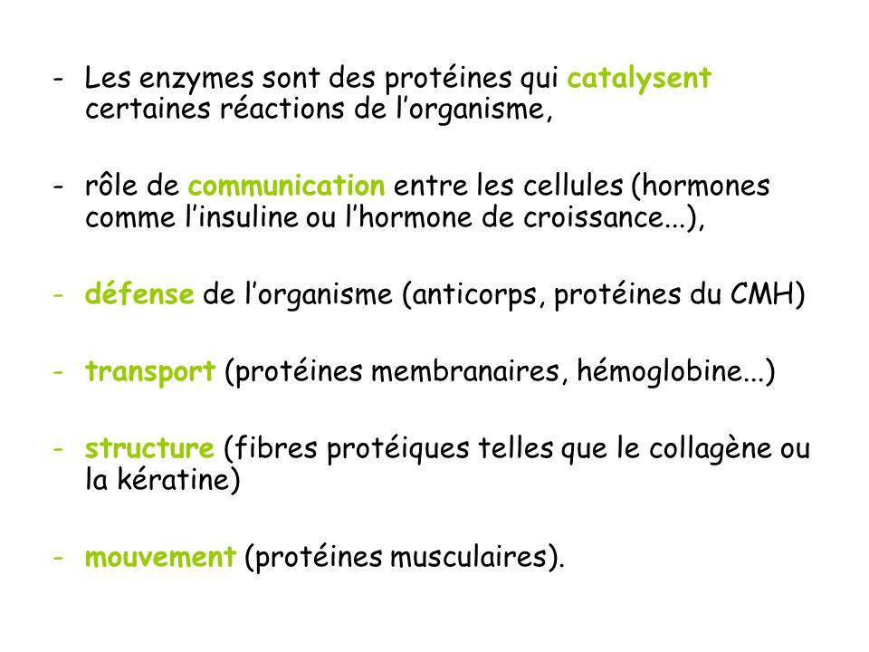 défense de l'organisme (anticorps, protéines du CMH)