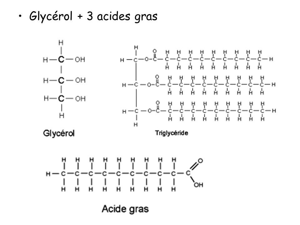 Glycérol + 3 acides gras