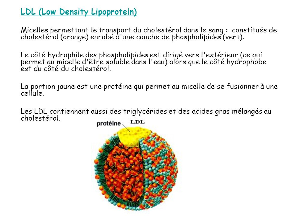 LDL (Low Density Lipoprotein)