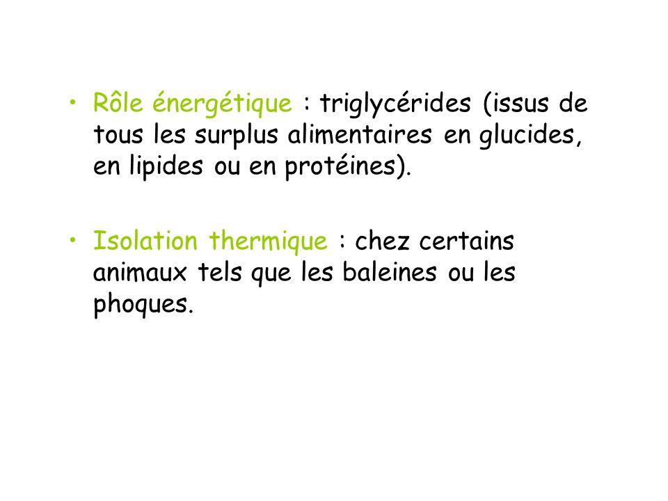 Rôle énergétique : triglycérides (issus de tous les surplus alimentaires en glucides, en lipides ou en protéines).
