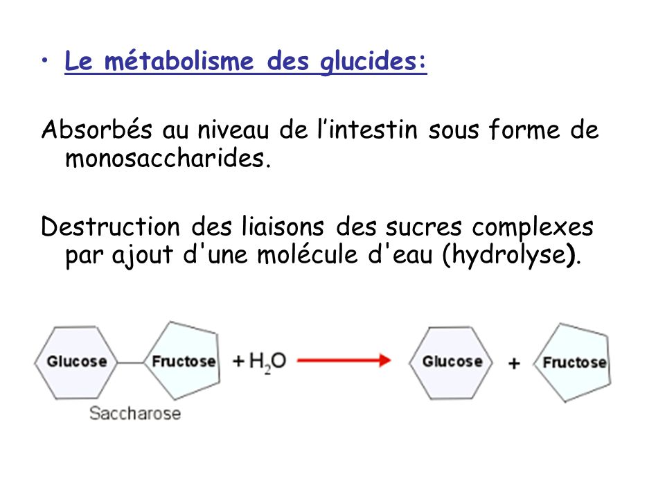 Le métabolisme des glucides: