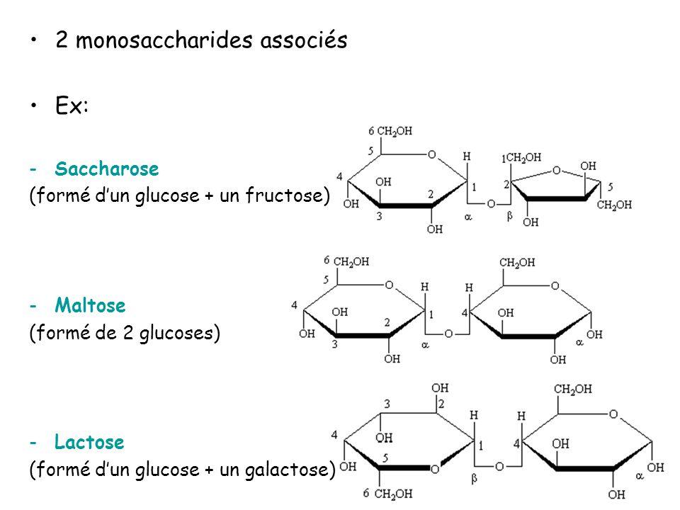 2 monosaccharides associés Ex:
