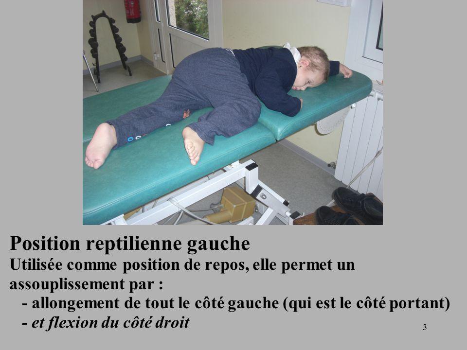 Position reptilienne gauche Utilisée comme position de repos, elle permet un assouplissement par : - allongement de tout le côté gauche (qui est le côté portant) - et flexion du côté droit