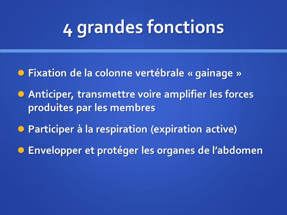 4 grandes fonctions Fixation de la colonne vertébrale « gainage »