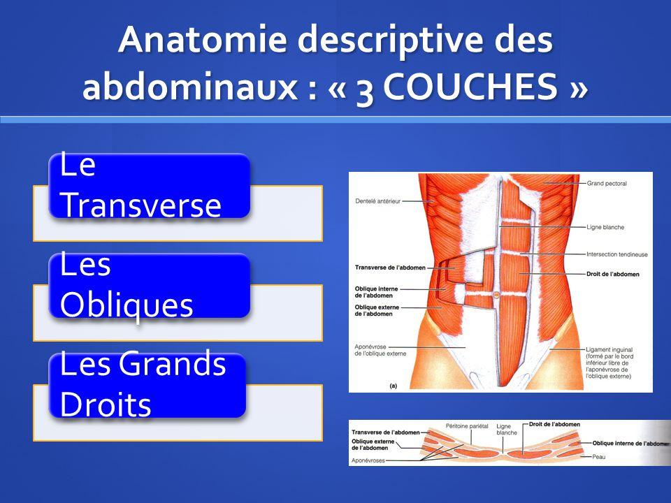 Anatomie descriptive des abdominaux : « 3 COUCHES »