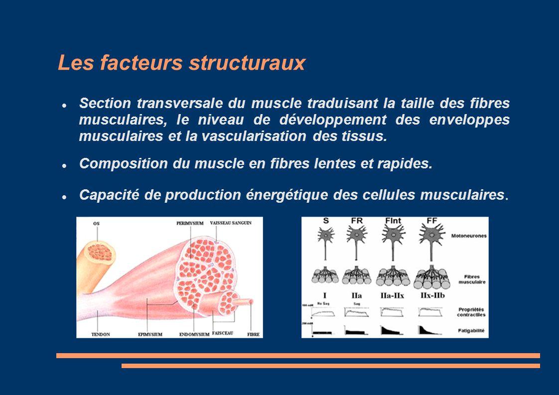Les facteurs structuraux
