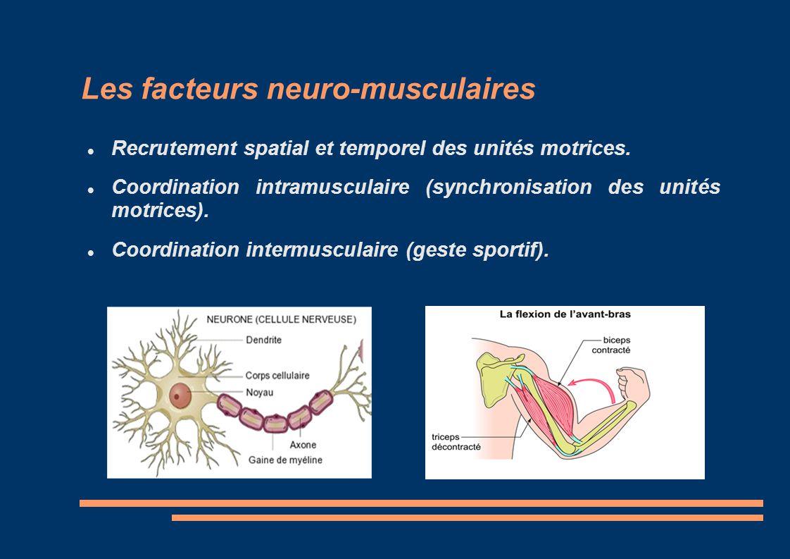Les facteurs neuro-musculaires