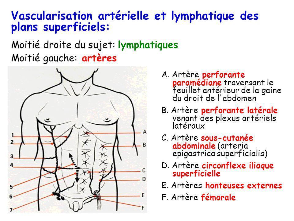 Vascularisation artérielle et lymphatique des plans superficiels: Moitié droite du sujet: lymphatiques Moitié gauche: artères