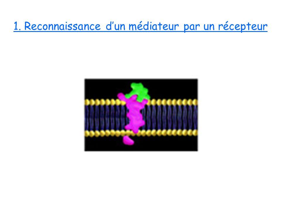 1. Reconnaissance d'un médiateur par un récepteur