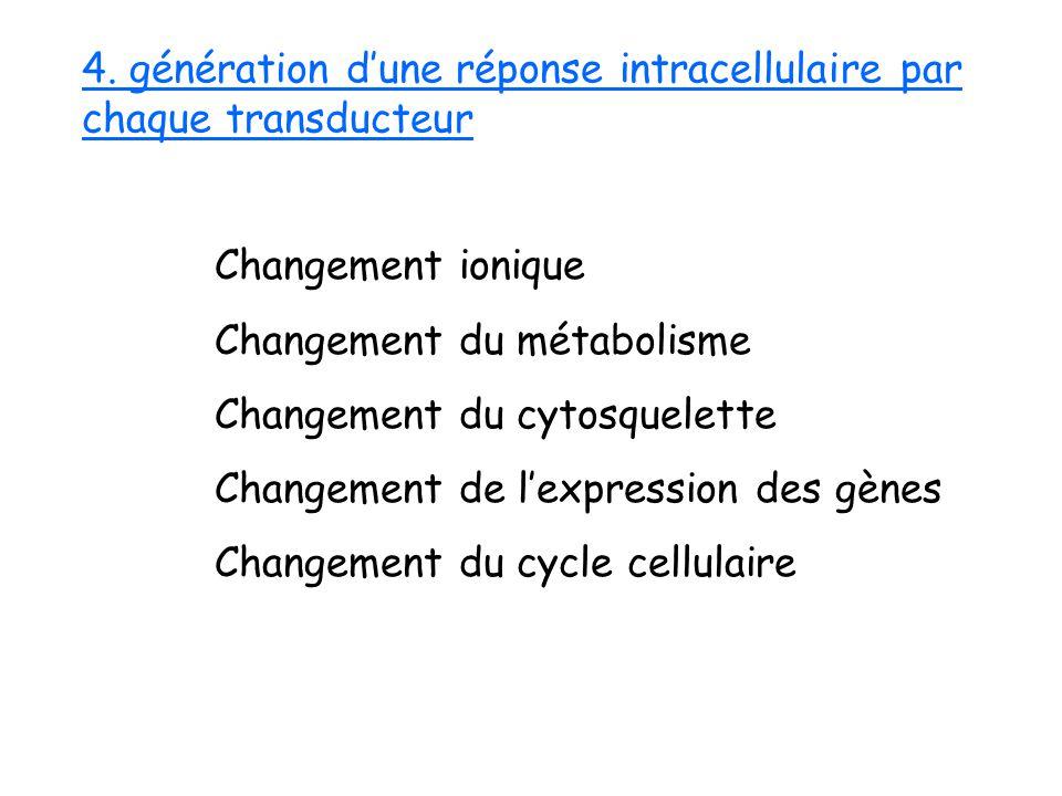 4. génération d'une réponse intracellulaire par chaque transducteur