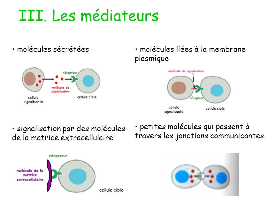 III. Les médiateurs molécules sécrétées