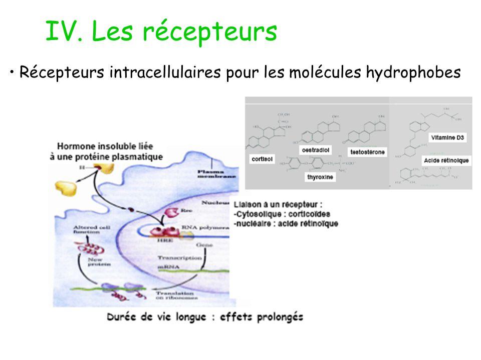 IV. Les récepteurs Récepteurs intracellulaires pour les molécules hydrophobes
