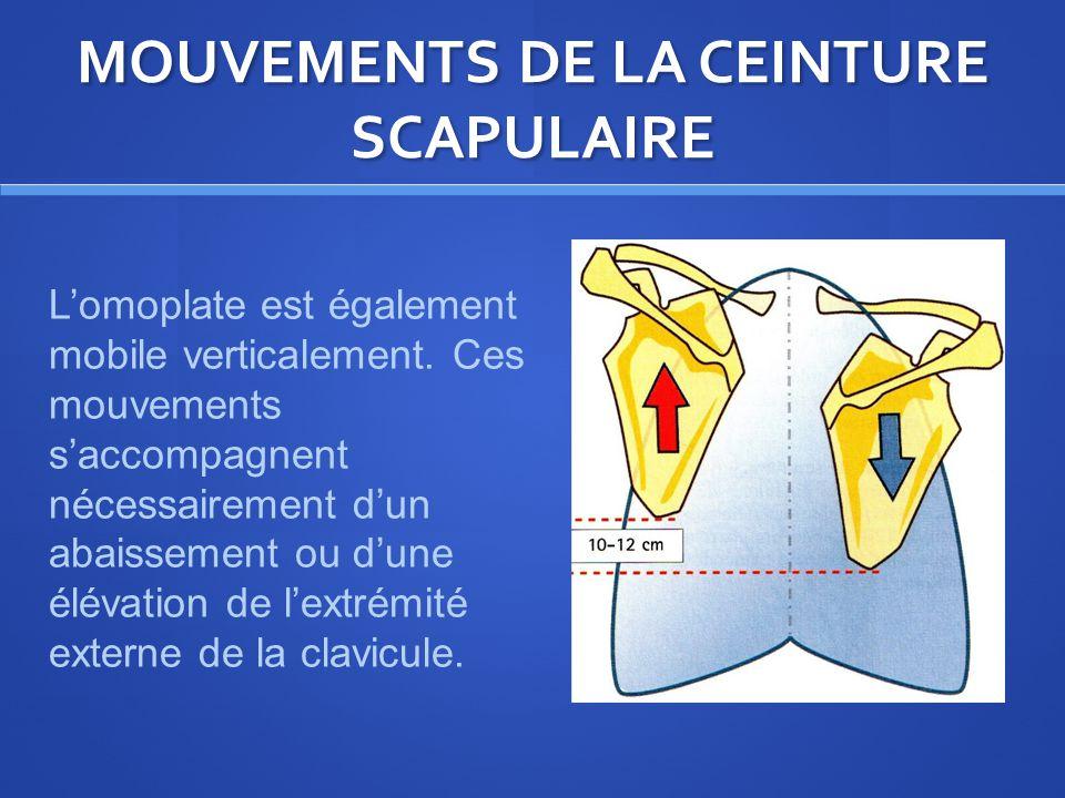 MOUVEMENTS DE LA CEINTURE SCAPULAIRE