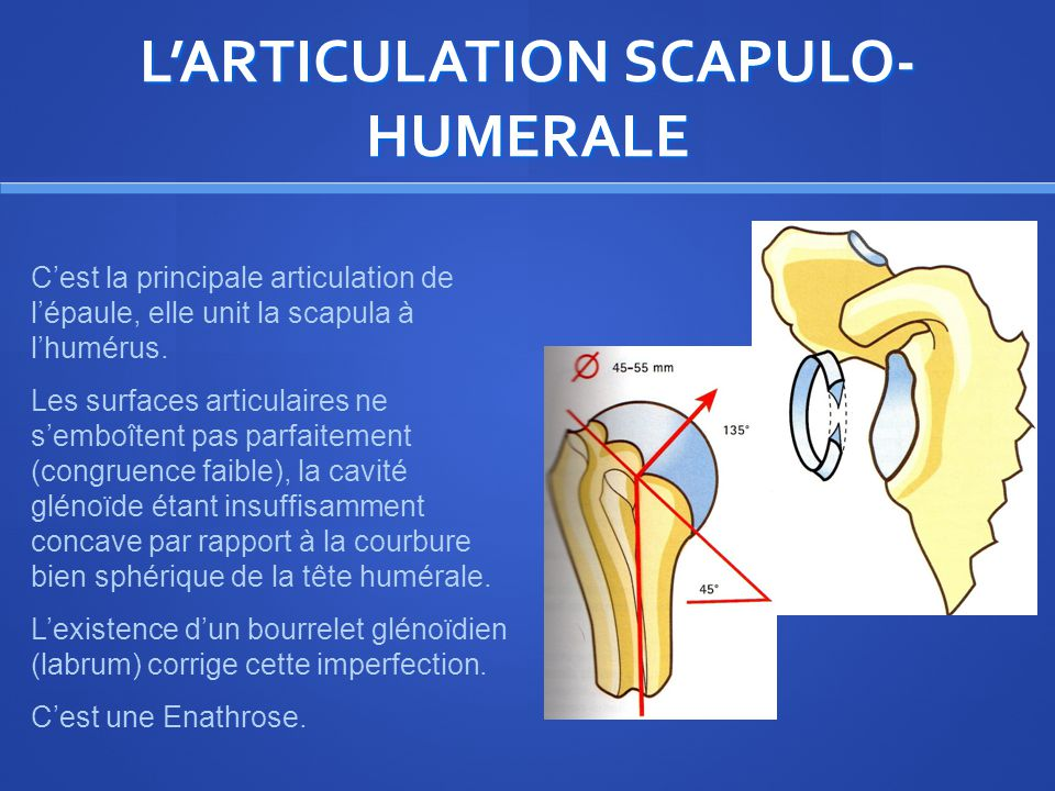 L'ARTICULATION SCAPULO-HUMERALE