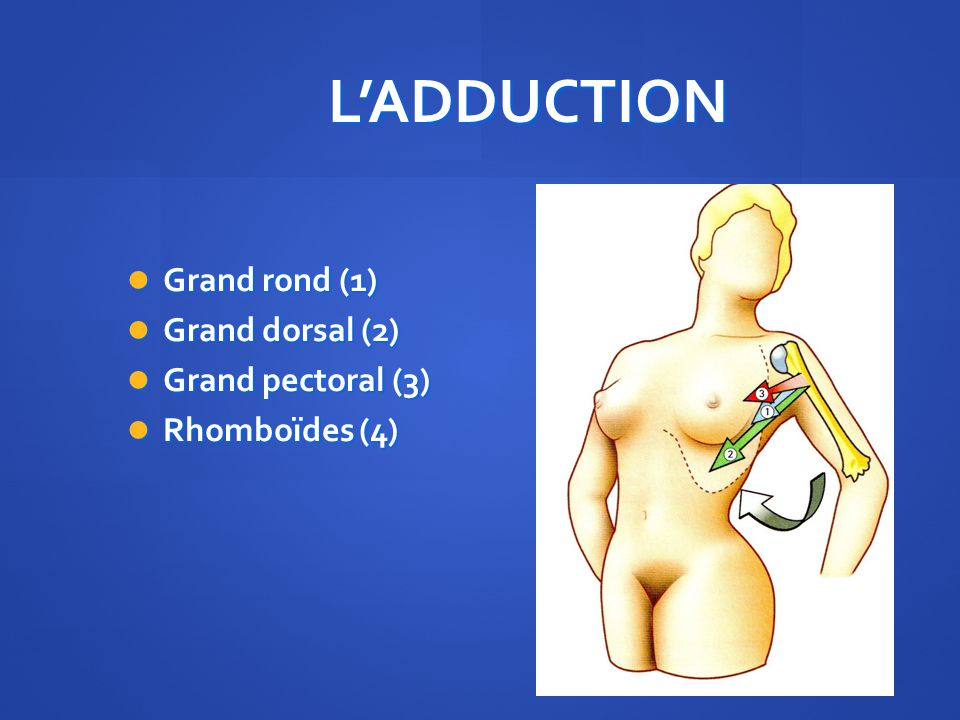L'ADDUCTION Grand rond (1) Grand dorsal (2) Grand pectoral (3)