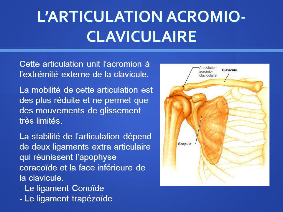 L'ARTICULATION ACROMIO-CLAVICULAIRE
