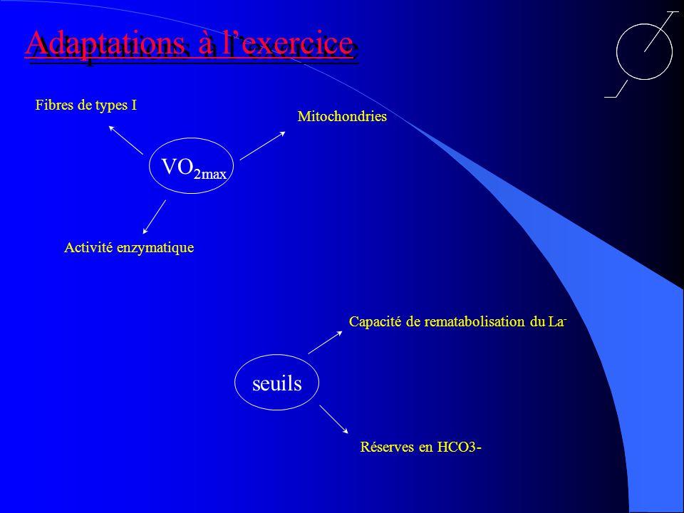 Adaptations à l'exercice
