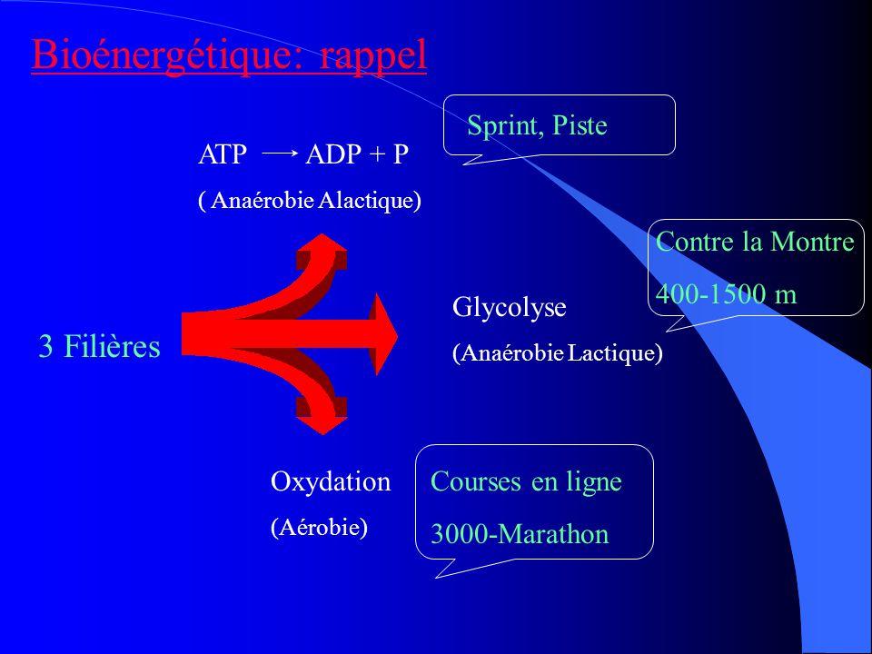 Bioénergétique: rappel