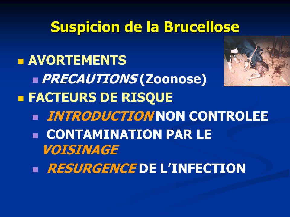 Suspicion de la Brucellose