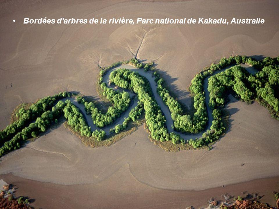 Bordées d arbres de la rivière, Parc national de Kakadu, Australie