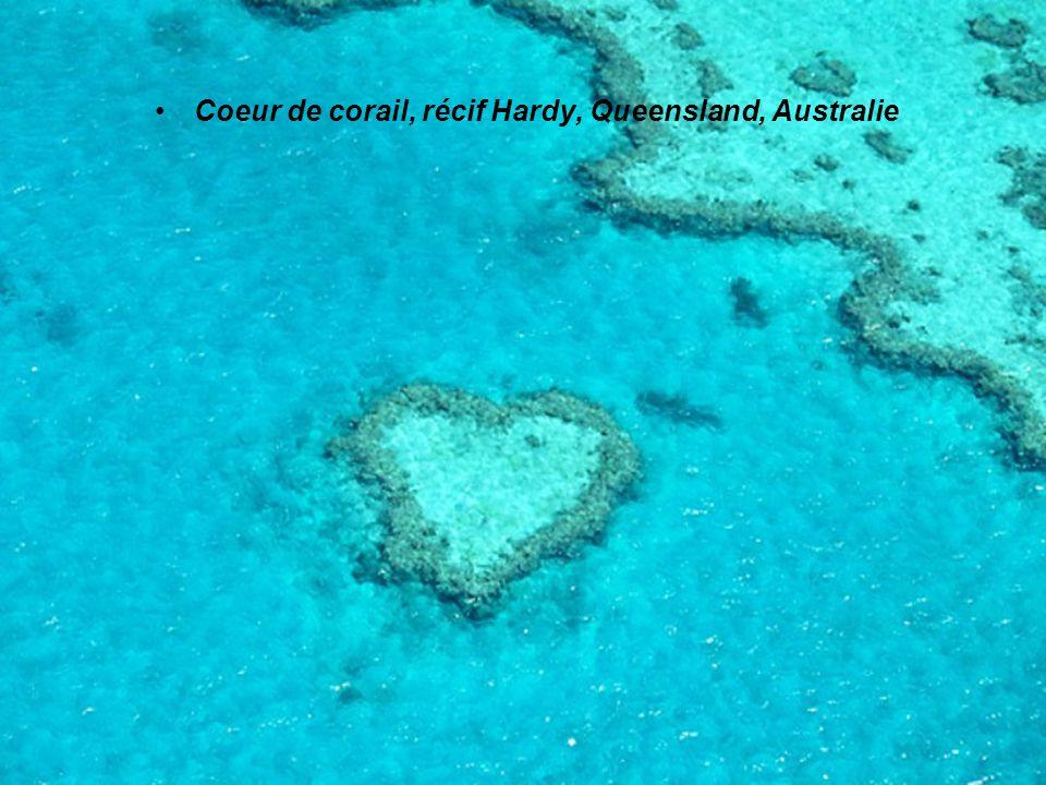 Coeur de corail, récif Hardy, Queensland, Australie