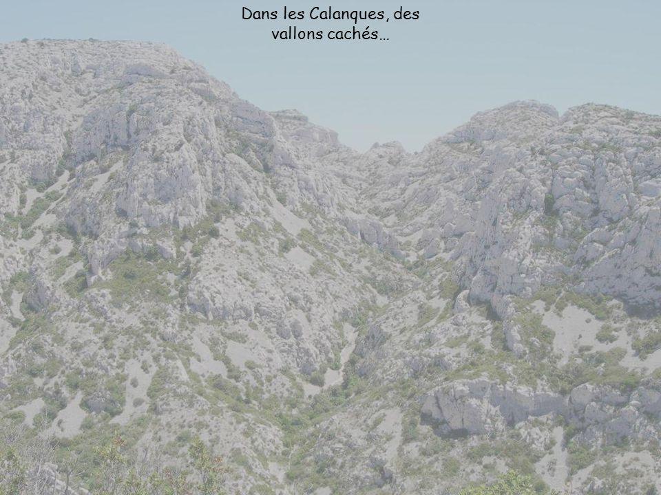 Dans les Calanques, des vallons cachés…