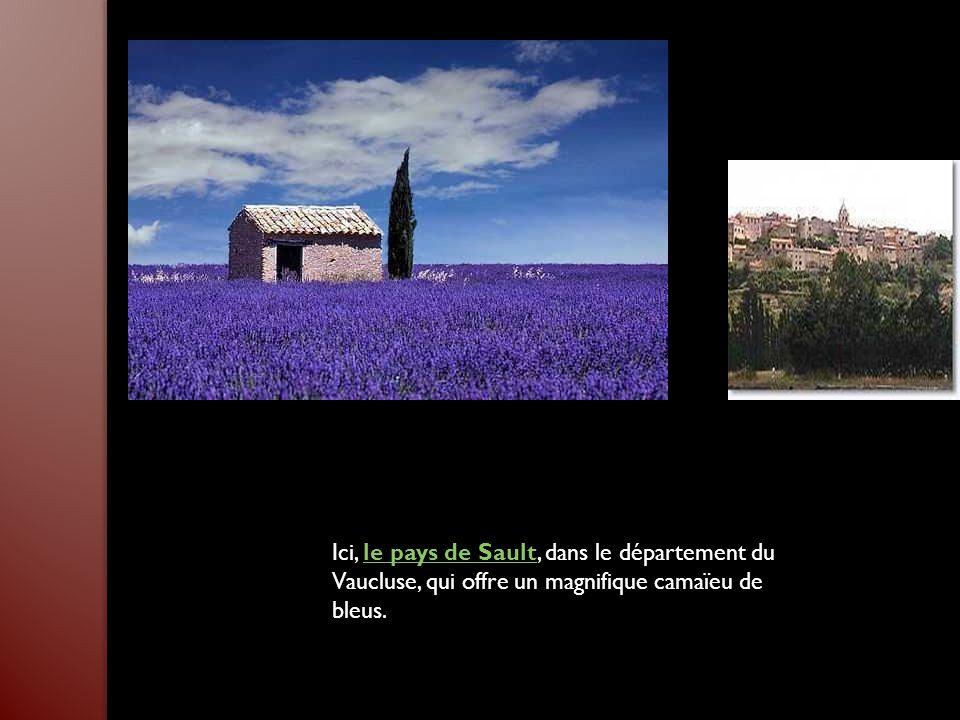 Ici, le pays de Sault, dans le département du Vaucluse, qui offre un magnifique camaïeu de bleus.