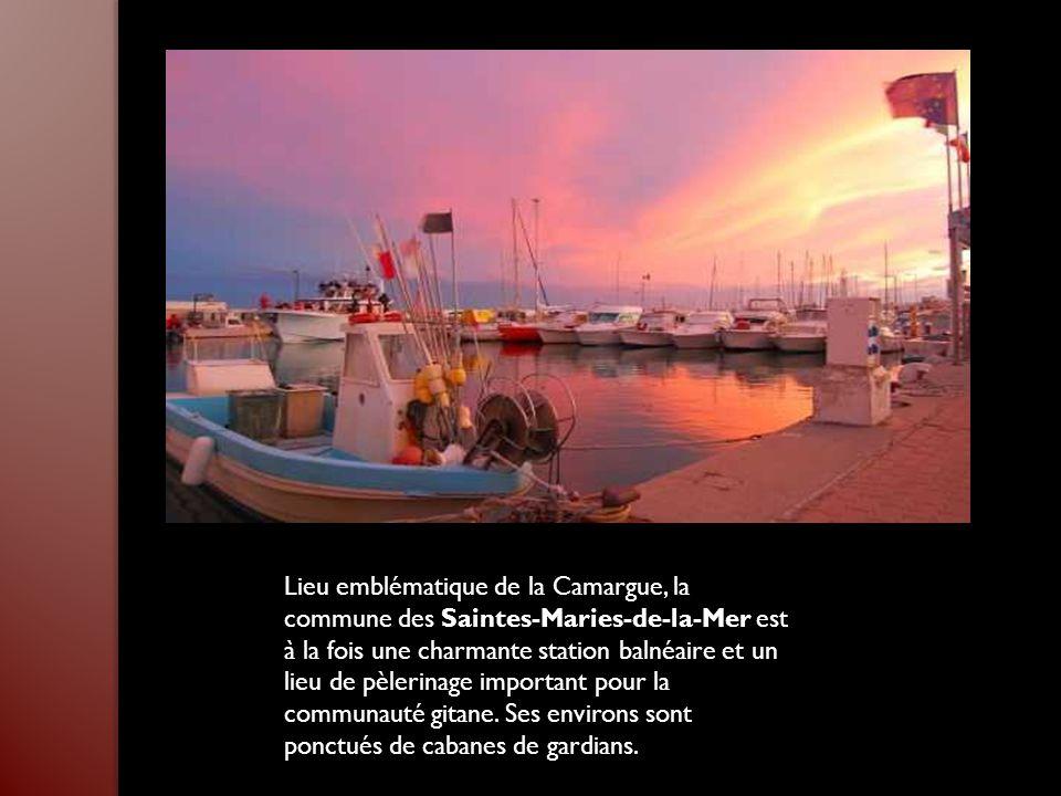 Lieu emblématique de la Camargue, la commune des Saintes-Maries-de-la-Mer est à la fois une charmante station balnéaire et un lieu de pèlerinage important pour la communauté gitane.