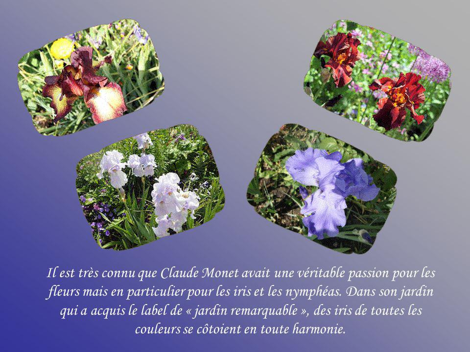 Il est très connu que Claude Monet avait une véritable passion pour les fleurs mais en particulier pour les iris et les nymphéas.