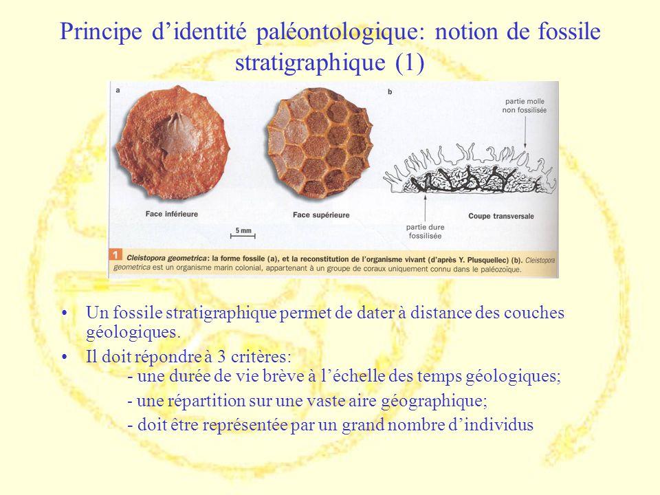 Principe d'identité paléontologique: notion de fossile stratigraphique (1)