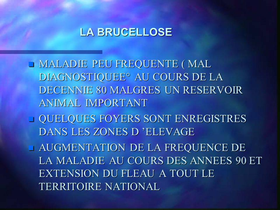 LA BRUCELLOSE MALADIE PEU FREQUENTE ( MAL DIAGNOSTIQUEE° AU COURS DE LA DECENNIE 80 MALGRES UN RESERVOIR ANIMAL IMPORTANT.