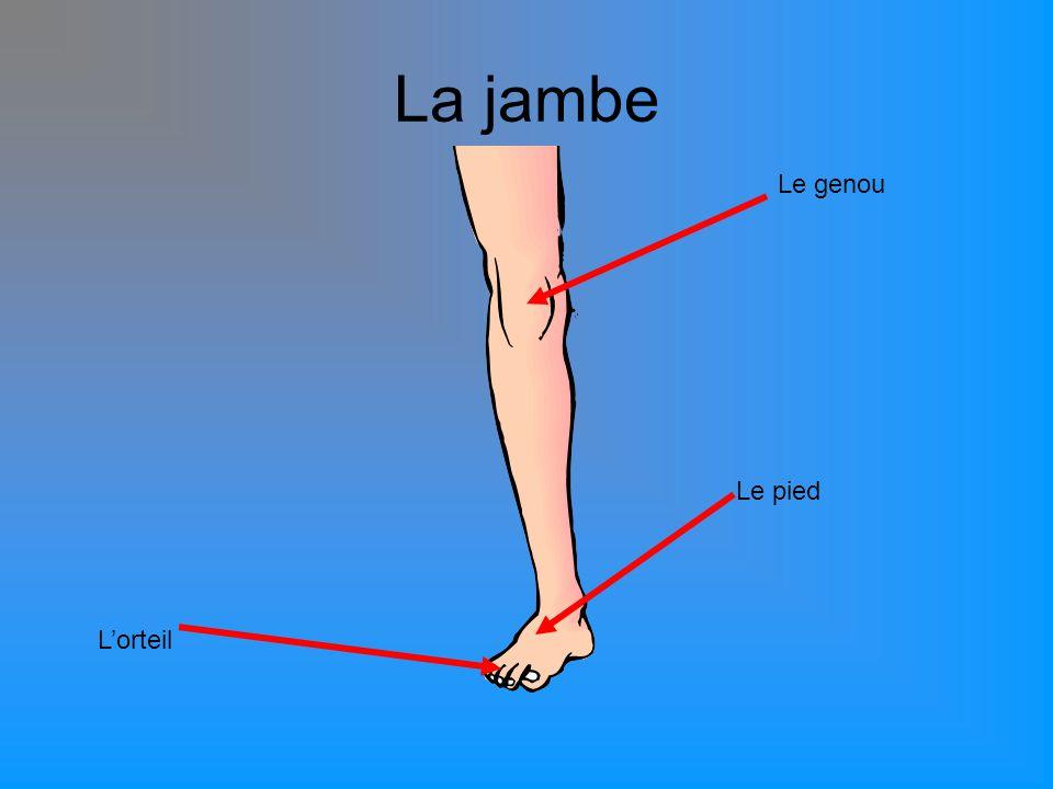 La jambe Le genou Le pied L'orteil