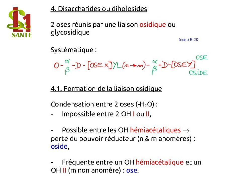 4 . Disaccharides ou diholosides