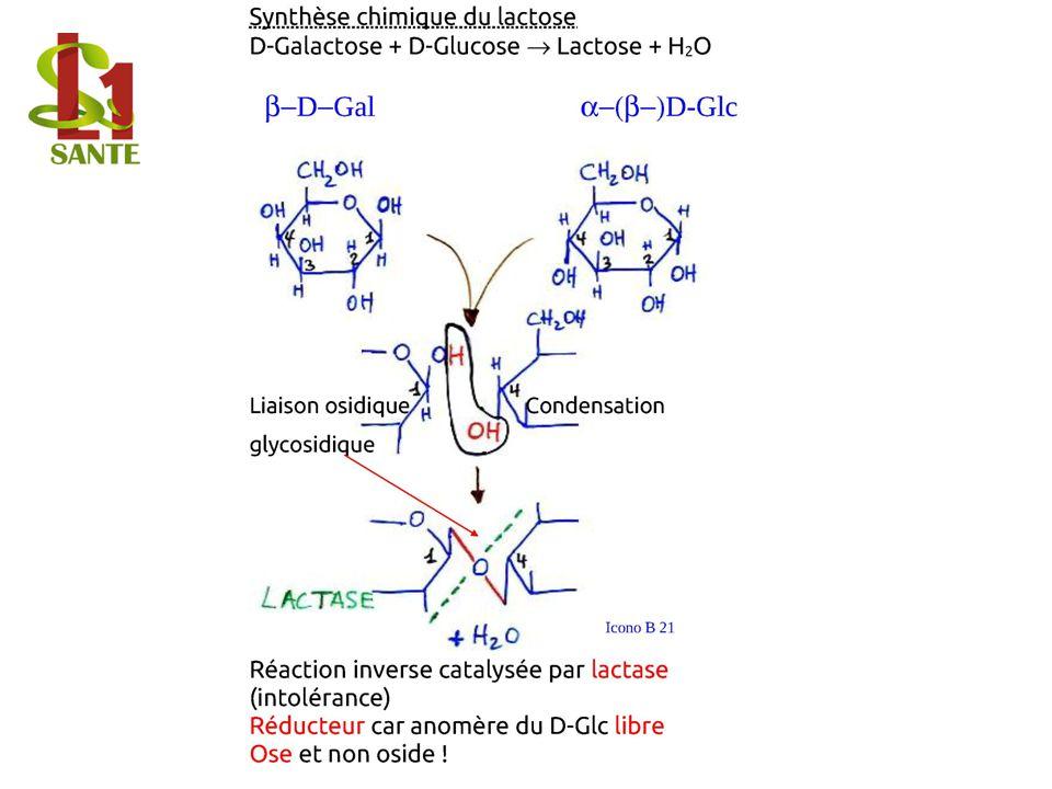 D-Galactose + D-Glucose ® Lactose + H2O Synthèse chimique du lactose